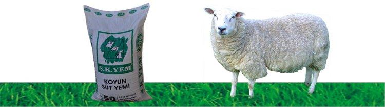 206 Koyun Süt Yemi
