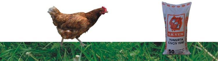 307 Yumurta Civciv Yemi