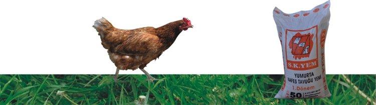 312 Yumurta Kafes Tavuk Yemi 1. Dönem